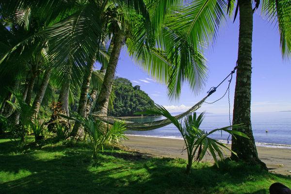 Costa Blanca - palmy na pláži