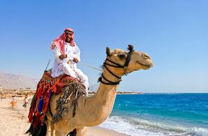 Egypt - projížďka na velbloudovi po pláži