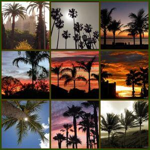 Brazílie - palmy